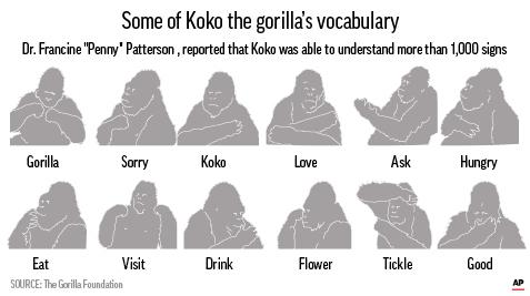 Koko the gorilla sign language chart