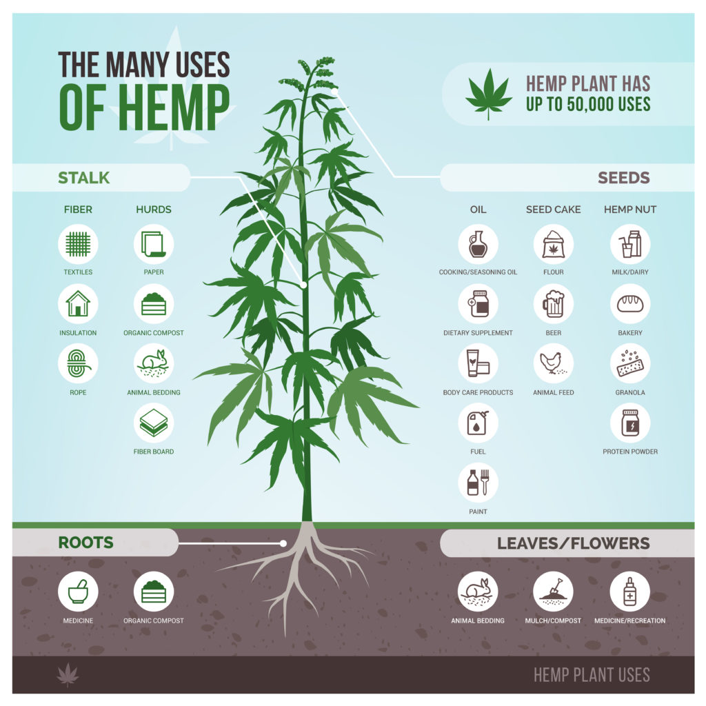 Illustration of the uses for hemp