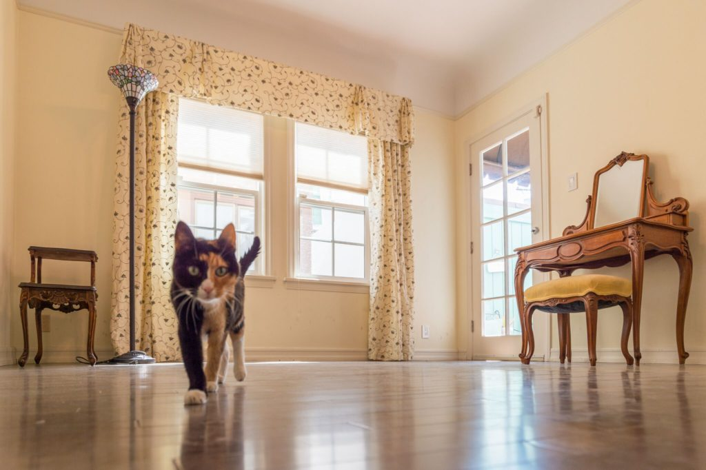 Photo of a cat in a sunlit room