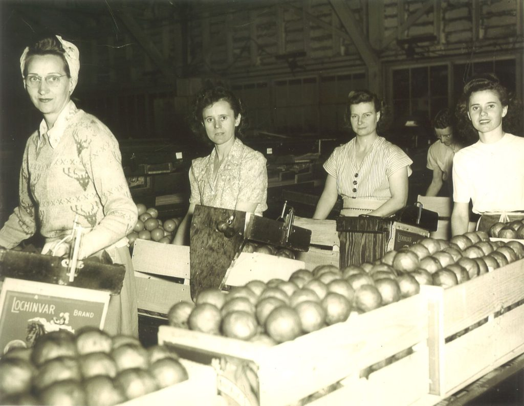Photo of women in a citrus packing shed