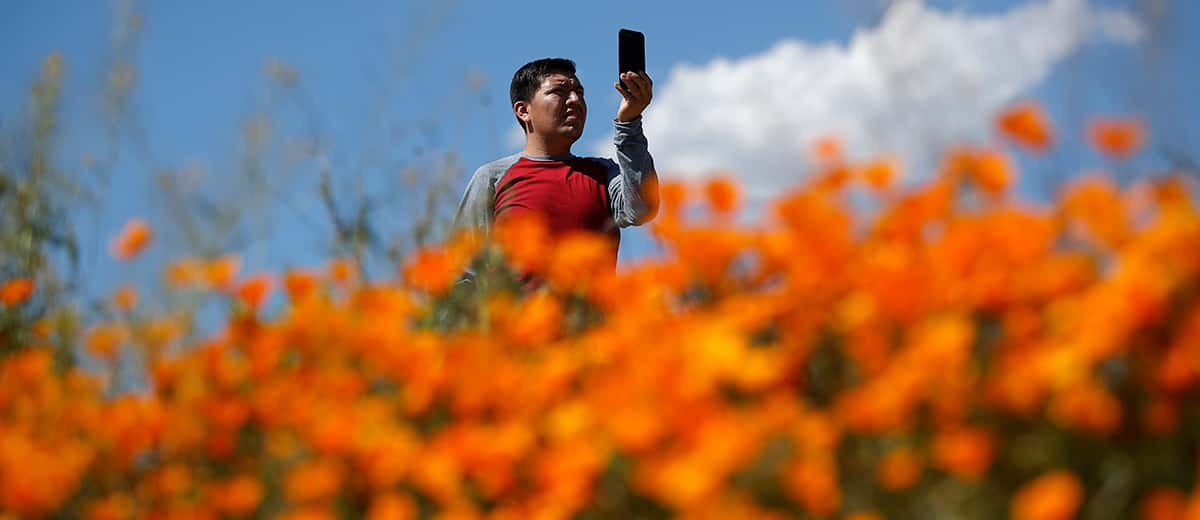 A man takes a photo of the wildflowers at Lake Elsinore in California
