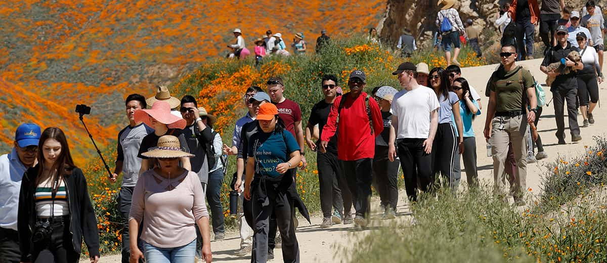 Photo of people walking among the wildflowers in bloom at Lake Elsinore in California
