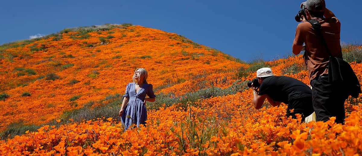 A model poses for a photo among the poppies at Lake Elsinore in California