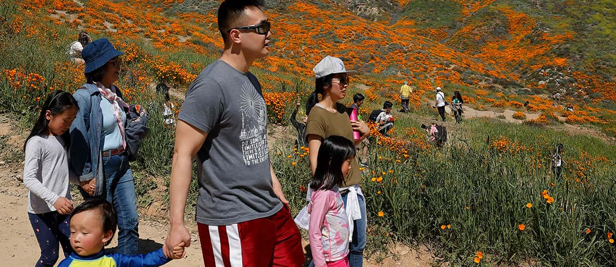 Photo of people walking among the wildflowers in Lake Elsinore, California