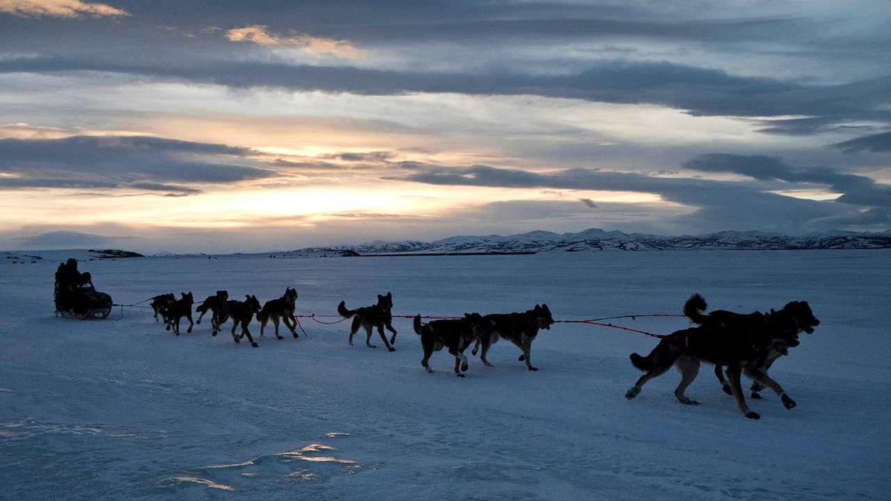 Photo of Nicholas Petit and his sled dogs in Alaska