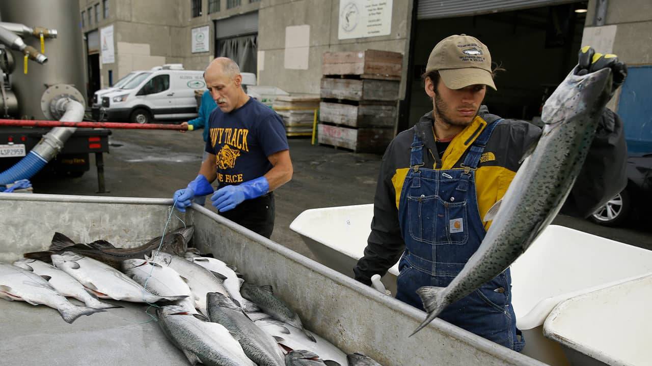 Photo of men looking for chinook salmon