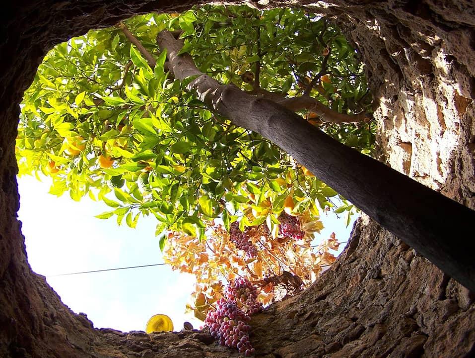 Photo of Forestiere Underground Gardens