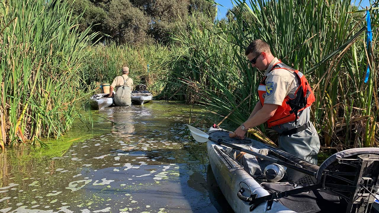 Photo of scientists cutting bait for nutria