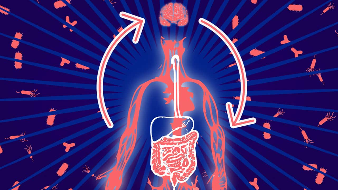 Photo of body diagram