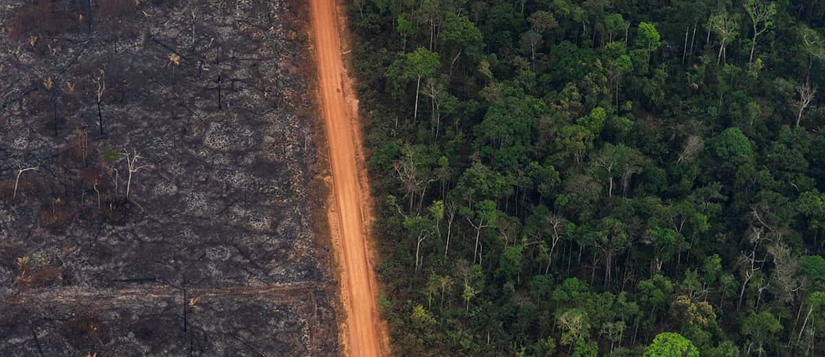 Photo of a lush forest sitting next to charred trees in Brazil