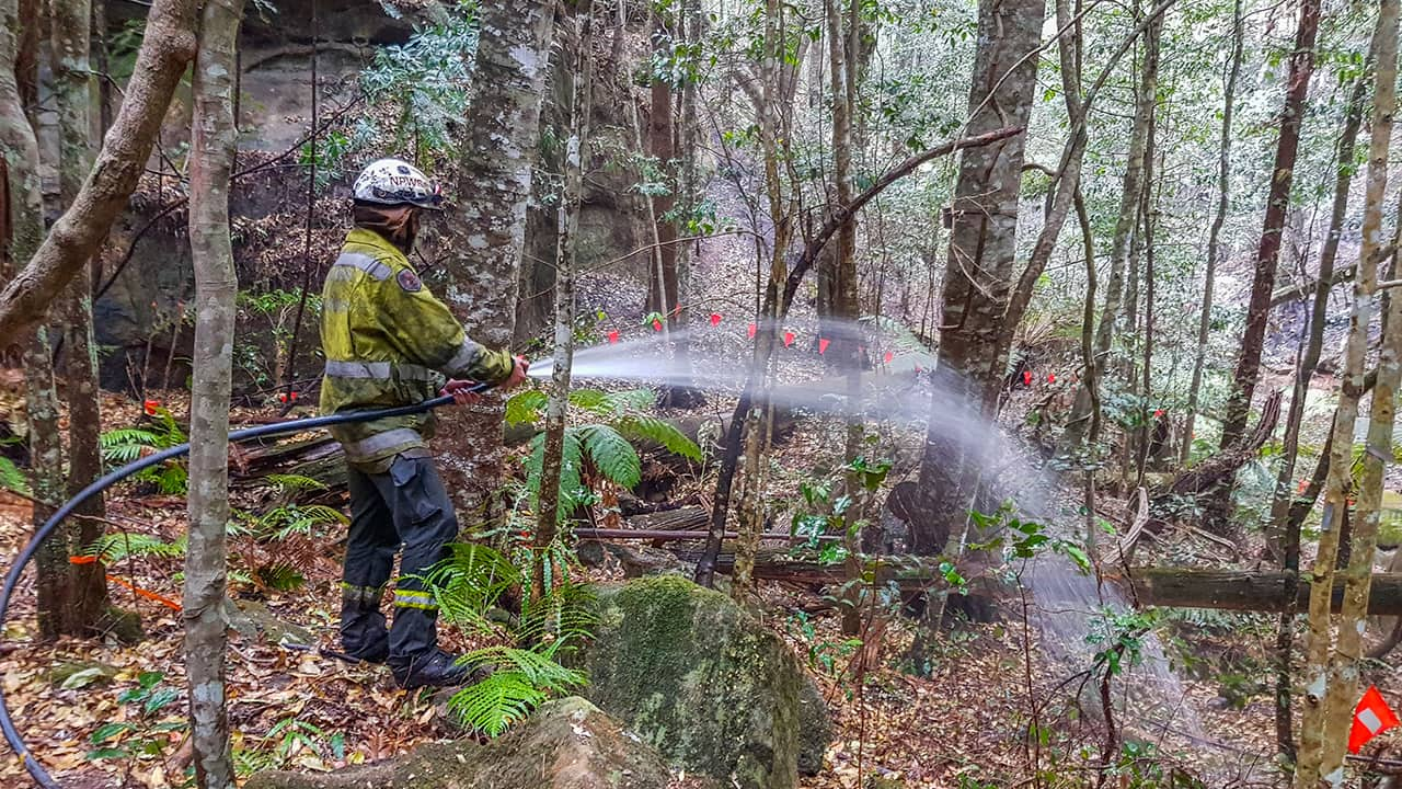 Photo of a wildlife service personnel dampening the forest floor